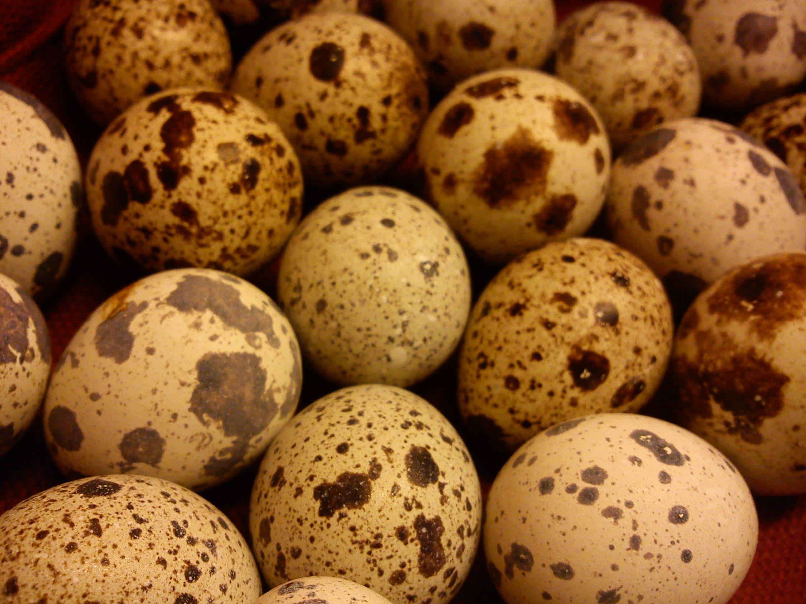 hvor mange egg har en kvinne gratis pografi